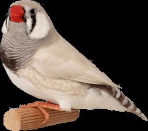 De vogelkweek
